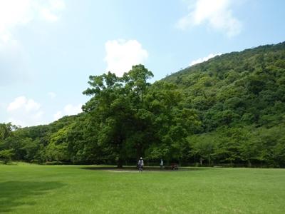 Kagawa31